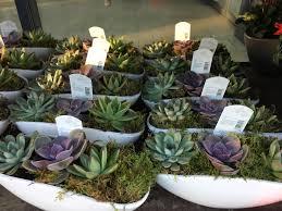 succulent arrangements uk lidl succulent arrangements in store from today succulents
