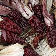 ornamental corn cherry berry harris seeds