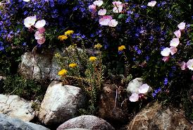 flowers and plants for rock gardens how to design a rock garden