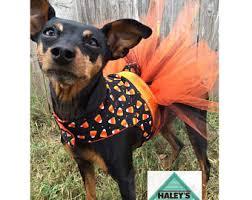Extra Large Dog Costumes Halloween Dog Costume Etsy