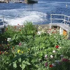 celia thaxter u0027s garden photo gallery shoals marine laboratory