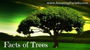 trees amazing facts 4 u