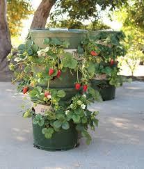 strawberry planter tower