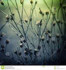 flowers and plants abstract nature background with wild flowers and plants stock