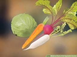 3 ways to plant a fall vegetable garden wikihow
