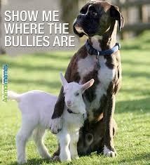 boxer dog meme dog memes protective friend dog memes pinterest dog memes