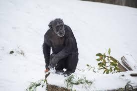 lexus ls in snow oregon zoo animals enjoy another snow day weyi