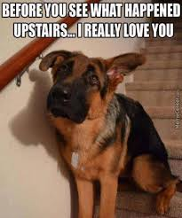 Funny German Shepherd Memes - german shepherd by doglover32 meme center