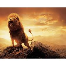 compare prices on lion animal poster fabric online shopping buy