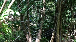 weave a giant frightful spider web for halloween make