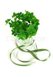 shamrock ribbon bouquet of false shamrock with green ribbon stock photo colourbox