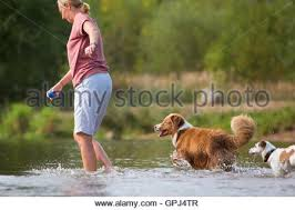 t r australian shepherds woman plays with an australian shepherd and a parson russell