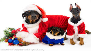 cute dog christmas wallpapers cute and funny pictures of animals 47 christmas dogs