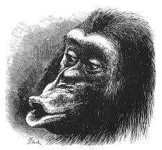 monkey profile monkey profile pinterest