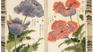 images of plants see dazzling botanical imagery through the ages atlas obscura