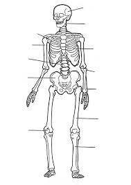 56 best the body el cuerpo images on pinterest the human