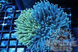 thanksgiving reefs thanksgiving black friday sale reef2reef saltwater and reef