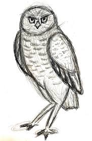burrowing owl sketch by voltis elusive on deviantart