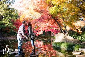 Ft Worth Botanical Gardens Weddings by Japanese Garden Fall Engagement Ideas The Purple Pebble Dallas