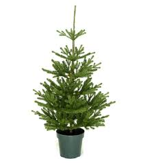 4ft imperial spruce potted feel real artificial tree