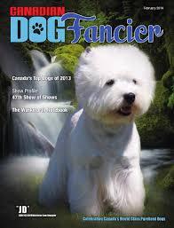 affenpinscher webster s canadian dog fancier february 2014 by shawn bennett issuu