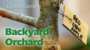 backyard orchard planting it youtube