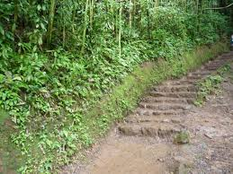 slippery stairs trail is muddy picture of oahu nature tours