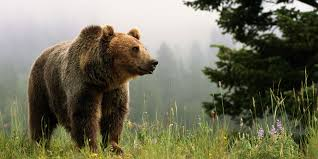 Colorado wildlife images Taking selfies with bears waterton canyon in colorado closes jpg
