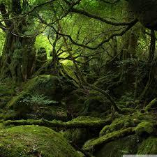 rainforest hd desktop wallpaper high definition fullscreen ipad