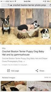 1039 best boston terriers images on pinterest boston terriers