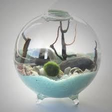 best live moss terrarium products on wanelo