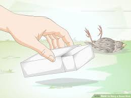 Can You Bury A Dog In Your Backyard How To Bury A Dead Bird 9 Steps With Pictures Wikihow