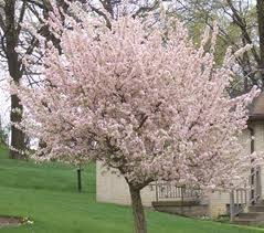 Best Trees For Backyard by 43 Best G Trees Images On Pinterest Garden Trees Small Trees