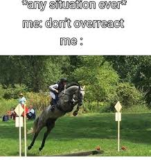 Horse Riding Meme - elisa wallace and her ottb lear equestrian pinterest horse