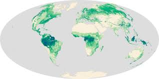 Amazon River On World Map by Global Forest Heights Take Two Image Of The Day