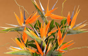 bird of paradise flower flower glossary birds of paradise proflowers