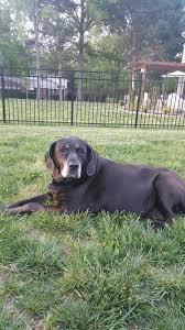 faithful companion pet cremation services