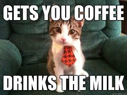 Intern Meme - gets you coffee drinks the milk intern kitten quickmeme