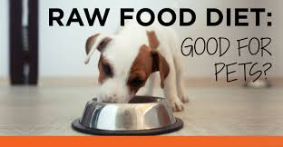 100 raw food diet dog recipes putting organic in to your