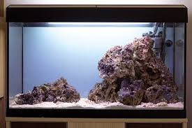 Live Rock Aquascaping How To Set Up A Planted Marine Aquarium U2014 Practical Fishkeeping