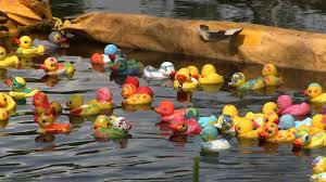 1 000 rubber ducks race at annual derby in winter park orlando