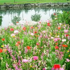 5 pack 1000 seed waterlogging tolerant wildflowers mix seeds