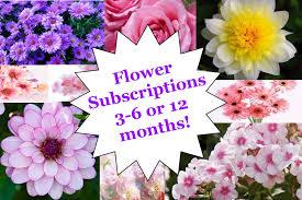 flower subscription subscription of fresh flowers in berlin nj maryjane s flowers