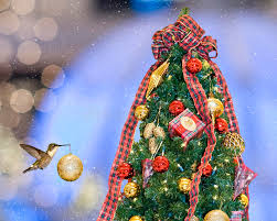 christmas hummingbird royalty free stock images image 17457579