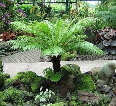 weed out weeds in the rainforest kuranda conservation apartment plants boston ferns boston fern indoor plant boston