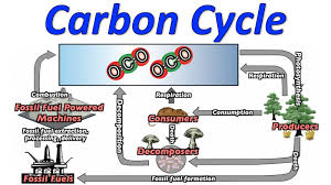 Biology Teks 12 E Carbon And Nitrogen Cycles Lessons Tes Teach