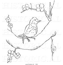 historical vector illustration of a wood thrush bird in a tree
