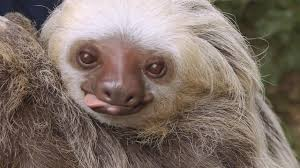 for the of sloths