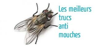 chasser les moucherons dans la cuisine trucs anti mouches astuces de grand mère
