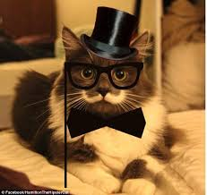 Hipster Kitty Meme - the new grumpy cat hamilton the hipster cat becomes latest internet